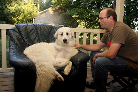 hond wil niet meer in bench