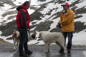 With a young Saint Bernard on the Grand St. Bernard pass