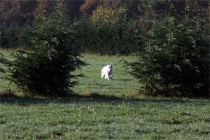 On the running field