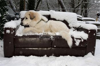 On my outside bench in the snow