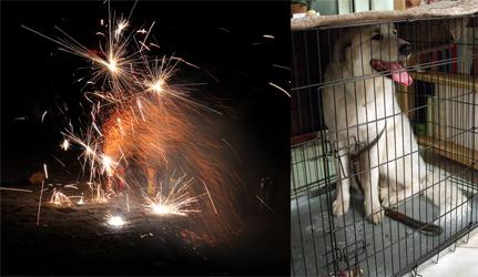 I do not like fireworks!