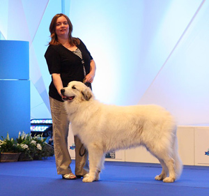 In Paris during the World Dog Show