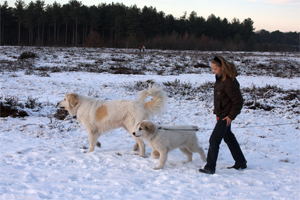 Walking on the moor with Lana and Merel