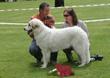 Best dog 6-9 months