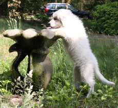I do no longer need Noor to drink from the fountain