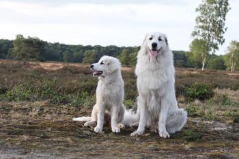 On the moor with big friend Noor