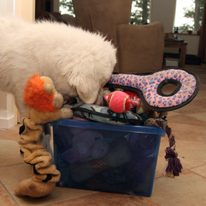 I am not spoiled with toys