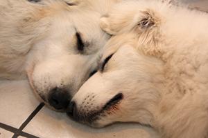 Sleeping with Noor