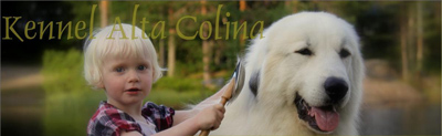 Kennel Alta Colina